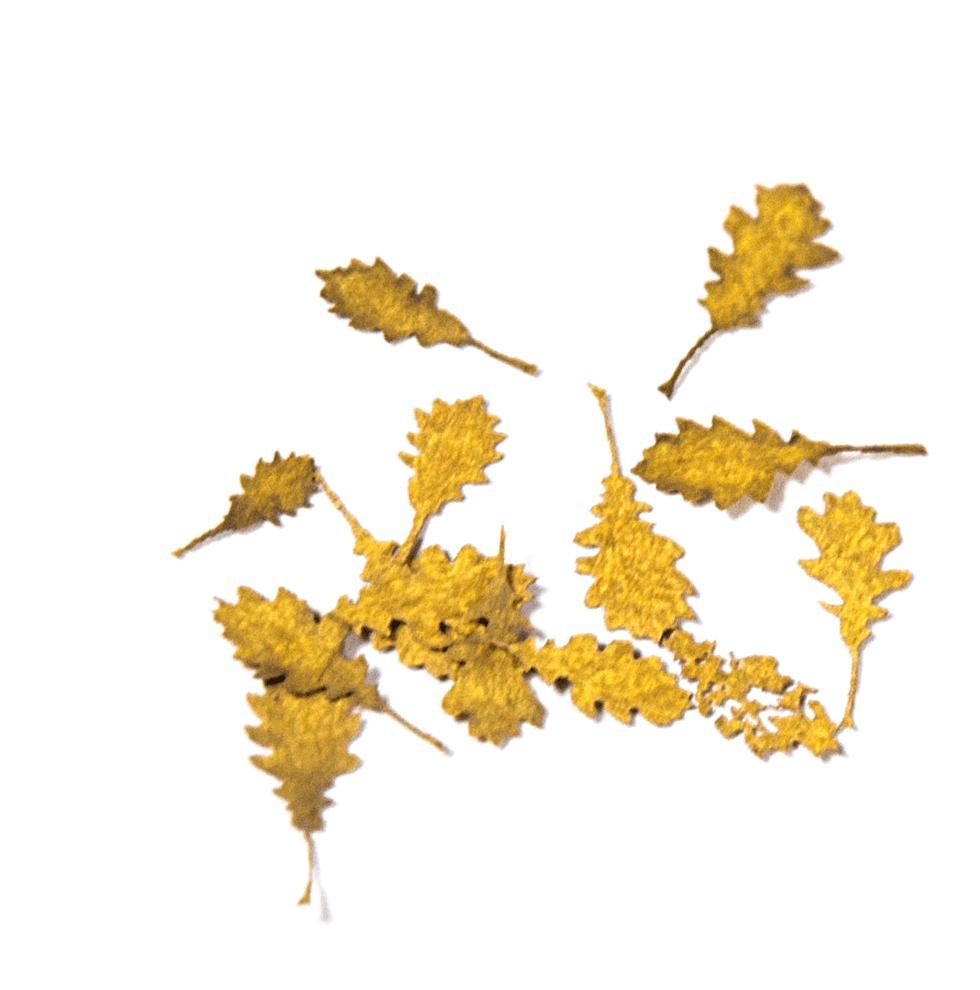 Oak Autumn - Dry Leaves