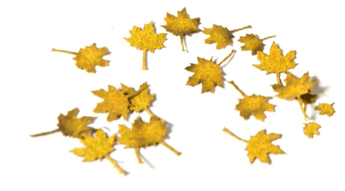Maple Autumn - Dry Leaves - Image 1